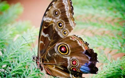 Tropical Butterfly 1