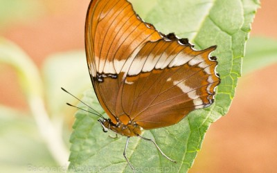 Tropical Butterfly 2