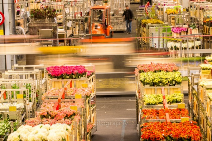 FloraHolland Flower Auction