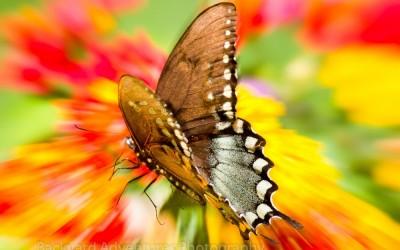 Radial Blur Butterfly