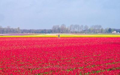 Flower Fields 5