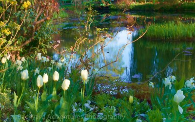 Monet Garden 3