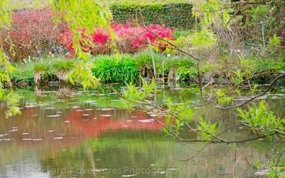 Monet Garden 7