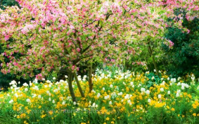 Monet's Garden 10
