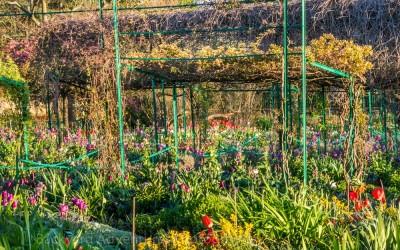 Monet's Garden 13