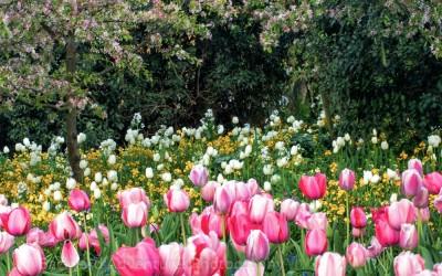 Monet's Garden 5