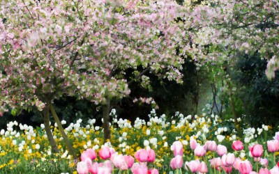 Monet's Garden 7