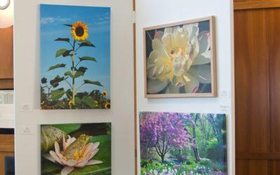 Sunflower-Panel